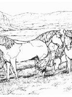 Pferde (3)