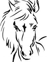 Pferde (4)