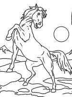 Pferde (10)
