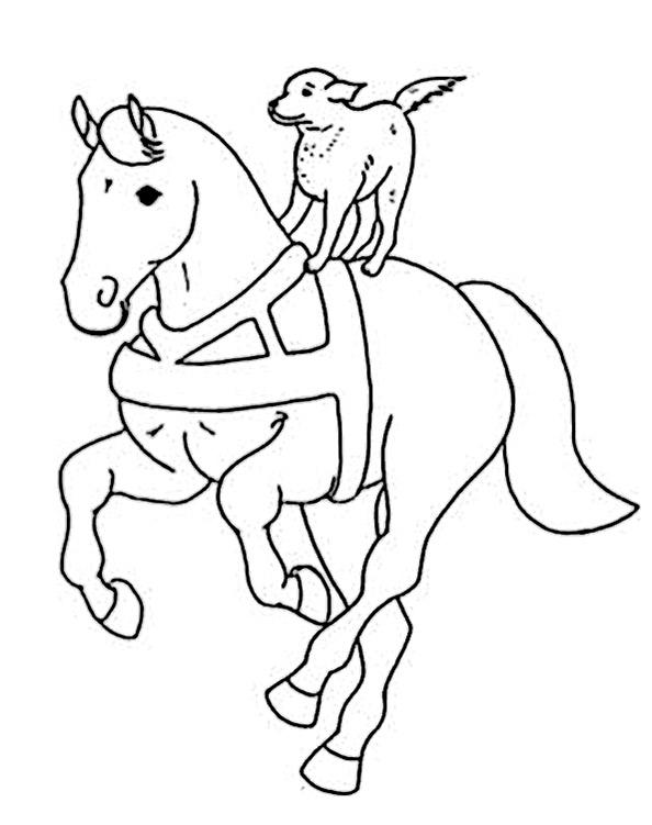 Pferde (11)
