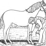Ausmalbilder Pferde 14