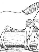Pferde (14)