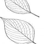 Ausmalbilder Blätter, Bild 3