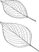 Blätter (3)