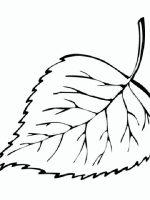Blätter (4)