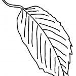 Ausmalbilder Blätter, Bild 5