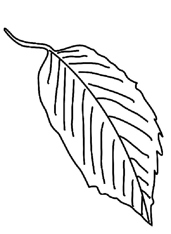 Blätter (5)