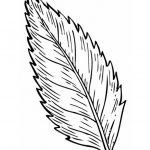 Ausmalbilder Blätter. Bild 6