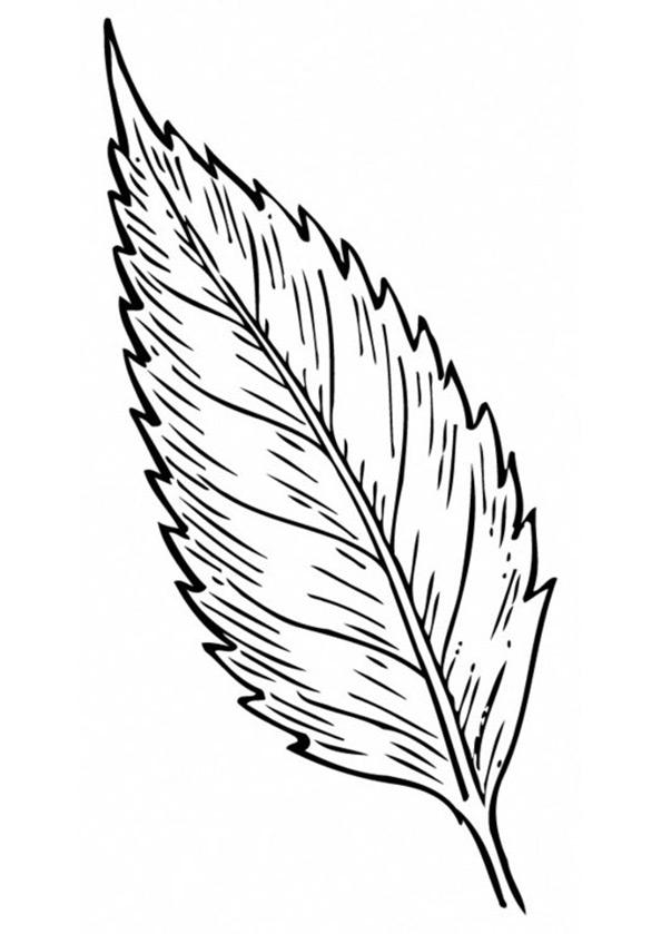 Blätter (6)